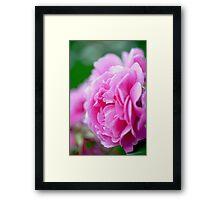 So Soft Pink Framed Print