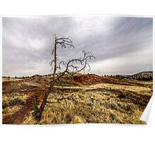 117Painted Hills Poster