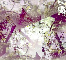 Graphic Canopy by tweeandme