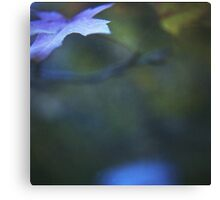 Leaves in blue square medium format film analog photographs Canvas Print