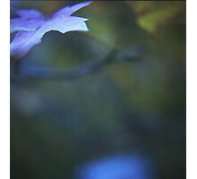 Leaves in blue square medium format film analog photographs Photographic Print