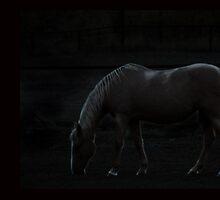 Moonlight Grazing by Betty MacRae