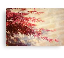 Japanese Maple with Brick Wall Canvas Print