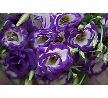 Eustoma PURPLE WHITE  Photographic Print
