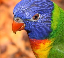 Rainbow Lorikeet by Leanne Allen