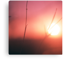 Foliage in silhouette against sun square medium format film analog photography Canvas Print