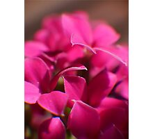 Tiny Magenta Blossoms Photographic Print