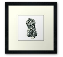 Cockapoo with a ball (white) Framed Print