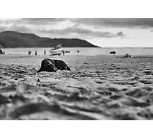 Dog in the sand Photographic Print
