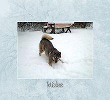 Midas by Lydia Marano