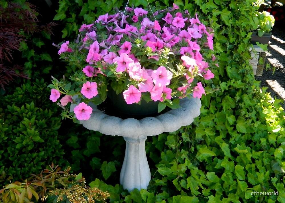 Garden Flowers - Bird Bath with Petunias     ^ by ctheworld