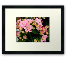 Garden Flowers   ^ Framed Print