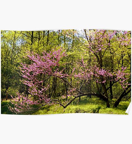 Country Scene - A Graceful Spring in Virginia   ^ Poster