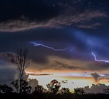 Acacia Electrical Storm by Tammy  Timm