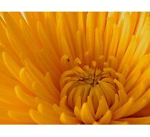 Happiness.........    ^ Photographic Print