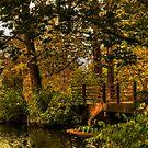 Deep Woods by Victoria Jostes