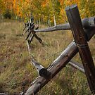 Fence in the fall by Luann wilslef