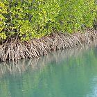 Mangrove Magic by Jenny Dean