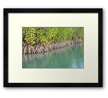 Mangrove Magic Framed Print