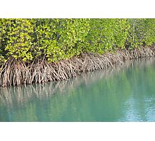 Mangrove Magic Photographic Print