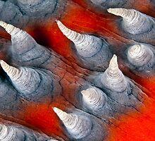 Teat? Fish? by David Wachenfeld