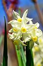 Celebrating Spring by Georgie Hart