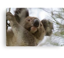 Blinky Bill Returns Canvas Print