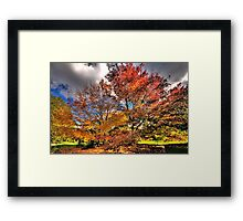 Autumn Glory - Mount Wilson, NSW - The HDR Experience Framed Print