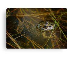 Iberian Green Frog Canvas Print