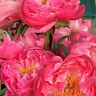 Bunch of Peonies by Christine  Wilson