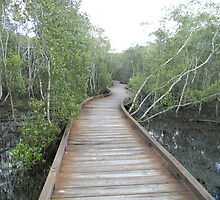 Mangrove BoardWalk - Coombabah Lakelands by xauvious