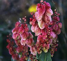 Desert Wildflower by myraj