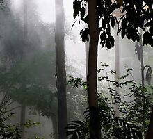 Rainforest. by Steve9