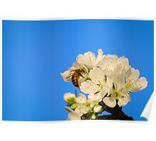 Spring Bee Poster