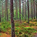 Bennachie Woods by Stuart  Fellowes