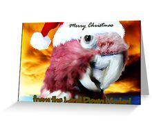 Merry Christmas from Koki the Galah Greeting Card