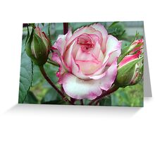 Rose with buds Greeting Card