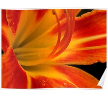 Daylily Bloom   ^ Poster