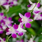Purple Rain in Oils by Kasia-D