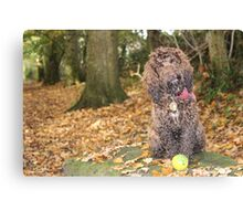 Cockapoo with Autumn Leaves in Woods Canvas Print