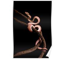 Brown Amazon Tree Boa Poster