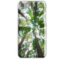 Looking Up At Trees iPhone Case/Skin