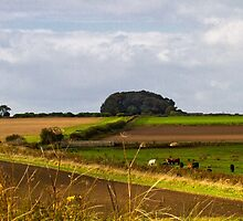 Copse on the horizon by Violaman
