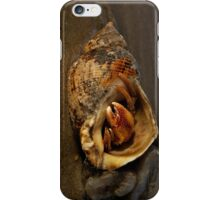 Hermit Crab on Fahan Beach iPhone Case/Skin