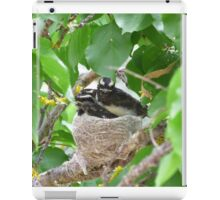 Three Little Willy Wagtails almost ready to fly! Australian native birds. iPad Case/Skin