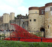 Poppies around the Tower of London by karina5