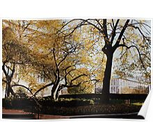 Fall Trees - NYC Poster