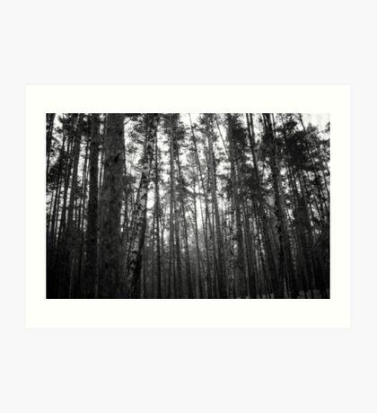 Birch Forest Noir Art Print