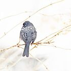 Dark-eyed Junco - Junco hyemalis  by MotherNature2