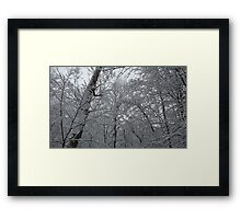 Snow and Trees Framed Print